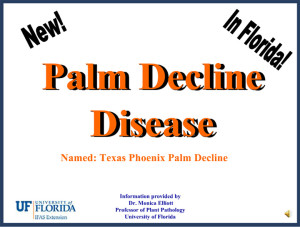 Palm Decline Disease